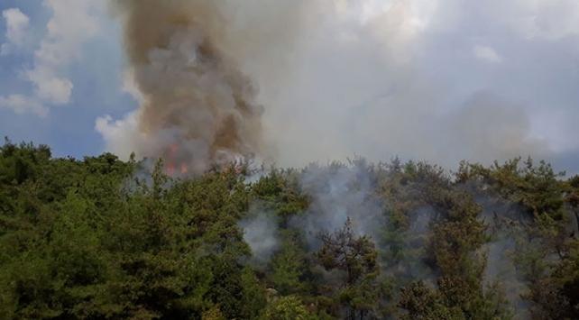 Osmaniyede orman yangını