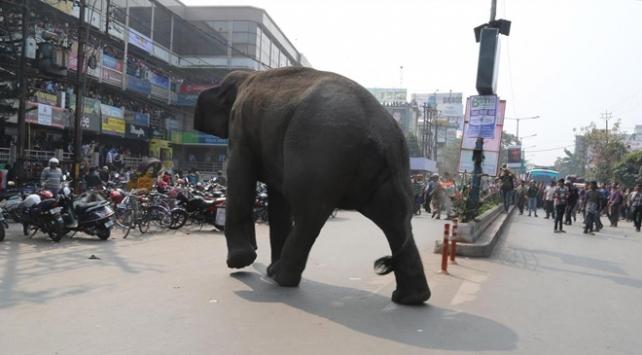 Hindistanda fil 5 kişiyi öldürdü