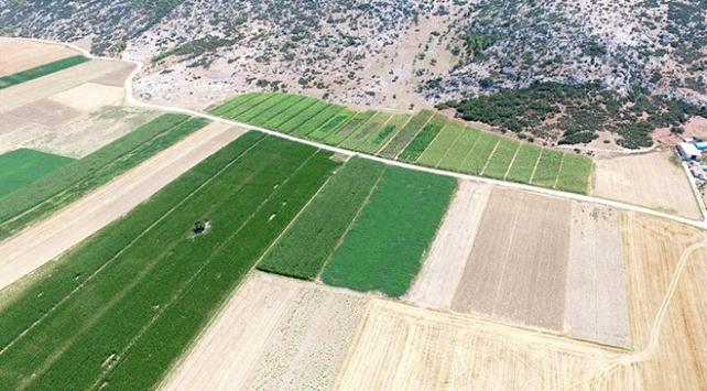 Kenevir ekim alanları uydudan tespit edilecek