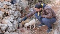 Bağdadi operasyonunda enkaz altında kalan yavru köpekler kurtarıldı