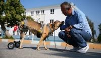 Sakat hayvanlara protez yürüteç yapan Mehmet öğretmen