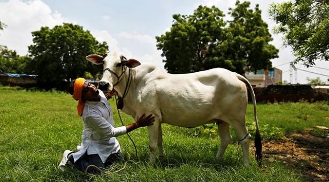 """Hint siyasetçiden """"Hindistandaki ineklerin sütünde altın bulunduğu"""" iddiası"""