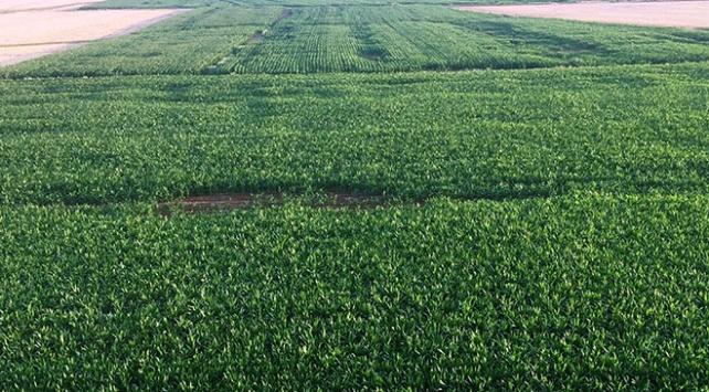 Mardinde 20 bin dekar tarım arazisi sulandı