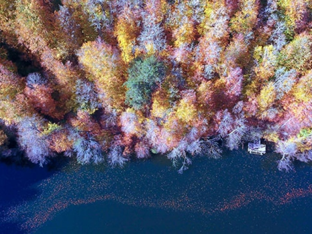Türkiyenin ormanlarına sonbahar uğradı