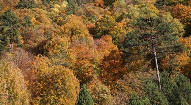 Demirci ormanlarında hazan renkleri