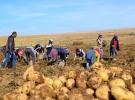 Bitlis'te patatesten 260 milyon liralık gelir bekleniyor