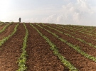 Çiftçilere patates siğiline karşı destekleme ödemesi