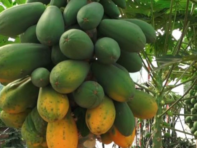 Çocukken okuduğu kitaptan etkilendi, tropikal meyve serası kurdu