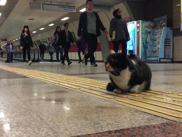 Metro Kedileri