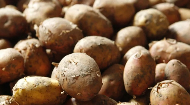 ABden Kolombiyaya patates davası