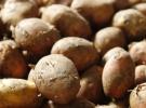 AB'den Kolombiya'ya patates davası