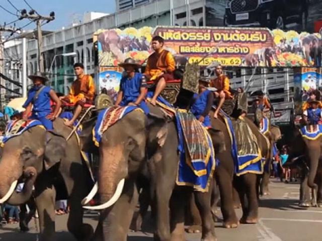 Tayland'da düzenlenen fil festivalinden renkli anlar
