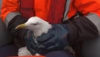 Denize düşen kanadı kırık martının imdadına Sahil Güvenlik yetişti
