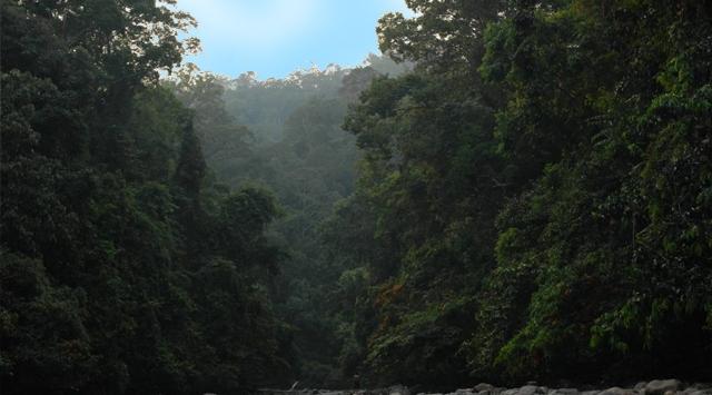 Endonezyada Kaybolan Uçağın Enkazına Ulaşıldı