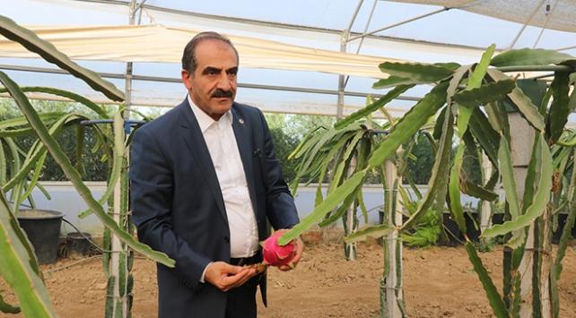 Türkiyede tropik meyve ihracatı artıyor