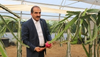 Türkiye'de tropik meyve ihracatı artıyor
