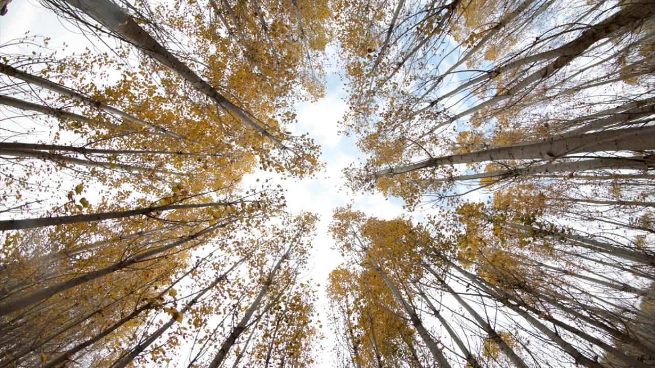 Ağrı Dağı eteklerindeki İrem Bağlarında sonbahar güzelliği