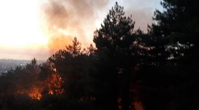 Hatayda orman yangını: 1 hektar alan zarar gördü