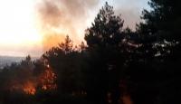 Hatay'da orman yangını: 1 hektar alan zarar gördü