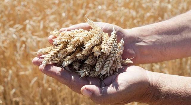 İlk özel tohum sertifikasyon merkezi Nevşehirde kurulacak