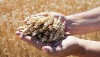 İlk özel tohum sertifikasyon merkezi Nevşehir'de kurulacak