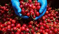 Türk tarım ürünleri için markalaşma atağı
