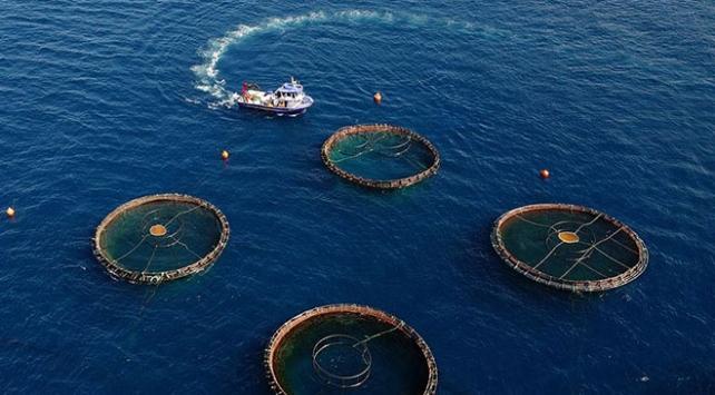 Su ürünlerinin yurt dışına çıkarılması izne tabi olacak