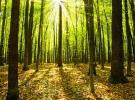 Çevreyi korumaya geçen yıl 38,2 milyar lira harcandı