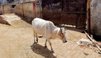 Hindistan'da inek kaçırdıkları iddiasıyla 2 kişi öldürüldü