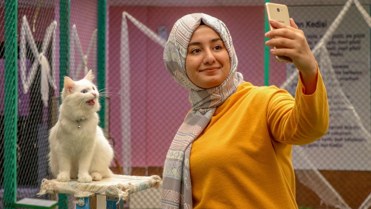 """Van kedisi """"Su"""" ziyaretçilerin ilgi odağı oldu ile ilgili görsel sonucu"""