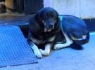 Taksim'deki sokak köpeği 2 ay sonra yine ısırdı