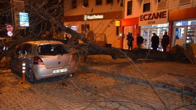 Tekirdağ'da dev ağaç otomobilin üstüne böyle devrildi