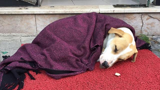 Üşüyen köpeğe örtülen battaniye yürekleri ısıttı