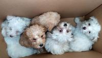 Sınırda karton kutularda 14 köpek yavrusu bulundu