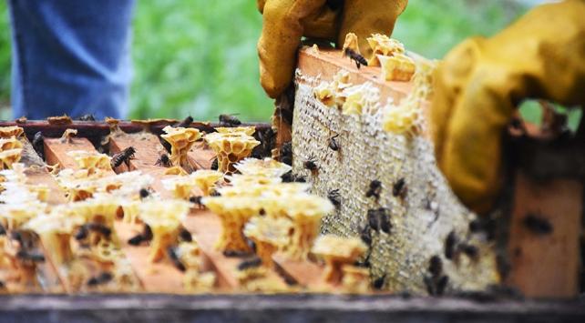 Avrupa Parlamentosundan arıları koruma adımı
