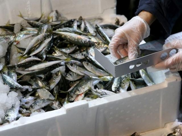 Başkentte balıkçılar tek tek denetlendi