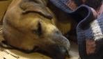 Soğuktan titreyen köpek minder ve battaniyeyle ısıtıldı
