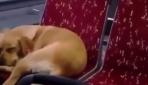 Soğukta üşüyen köpeği otobüse bindirdi