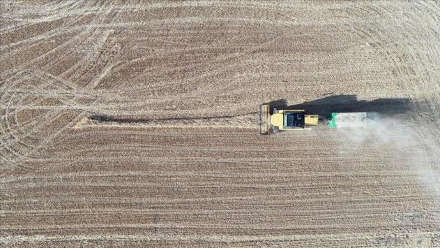 Yağışlar buğday üreticisinin yüzünü güldürdü