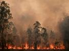 Avustralya'da yangınların gelecek haftalarda devam etmesi bekleniyor