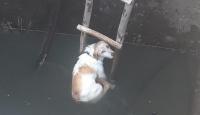 5 metrelik kuyuya düşen köpeği itfaiye kurtardı