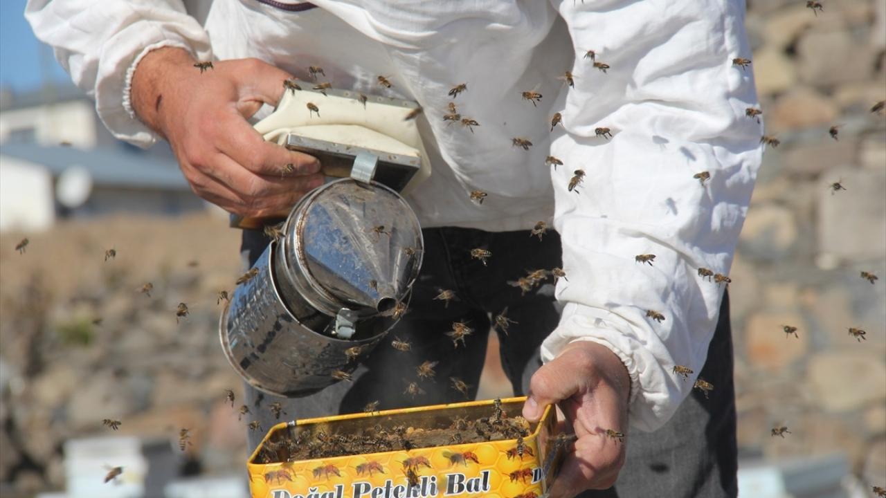 Kışın çetin geçtiği Karsta arıların tatlı uykusu başladı