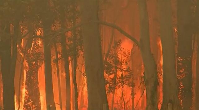 Avustralya yangınlarla boğuşuyor: En az 2 bin koala öldü
