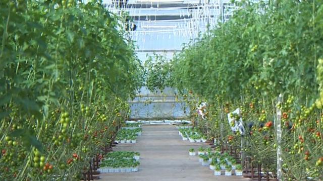 Tarımsal üretimin yüzde 14'lük kısmı israf ediliyor
