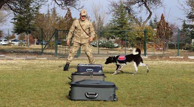 Yerli ırk köpekler, Nevşehir'deki JAKEM'de eğitiliyor