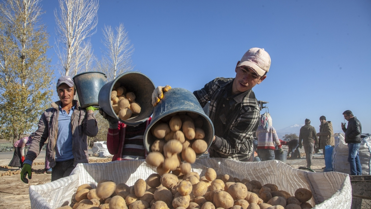 Ahlat'tan 100 milyon liralık patates tohumu satışı