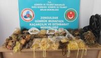 Zonguldak'ta 28 kilogram kehribar taşı ele geçirildi