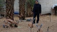 Gazzeli hayvansever ceylanlara gözü gibi bakıyor