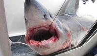 Köpekbalığı Teknede Delik Açtı