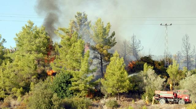 Bergamada makilik alanda yangın